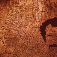 """la Rouquiquinante : Album """"Brassens au bois de mon coeur"""" - février 2009"""
